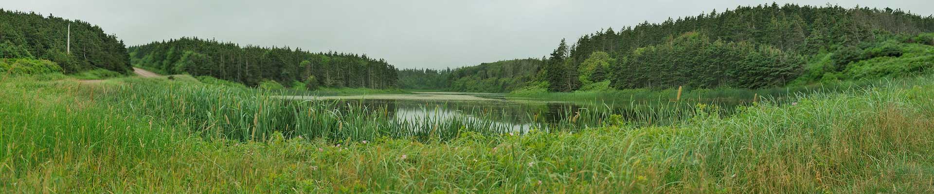 Swamp-PEI-Panorama